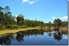 Desoto_National_forest_pond-2